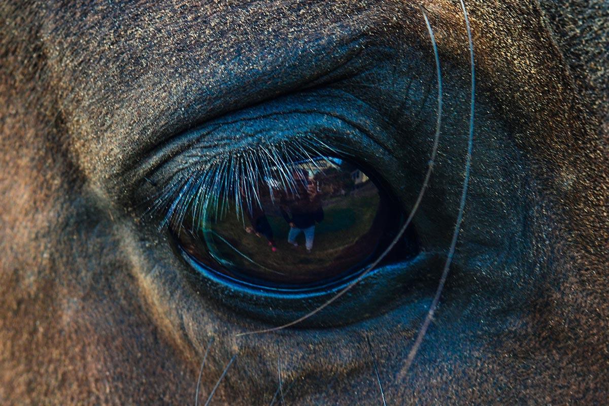 Pferdecoaching Siegerland