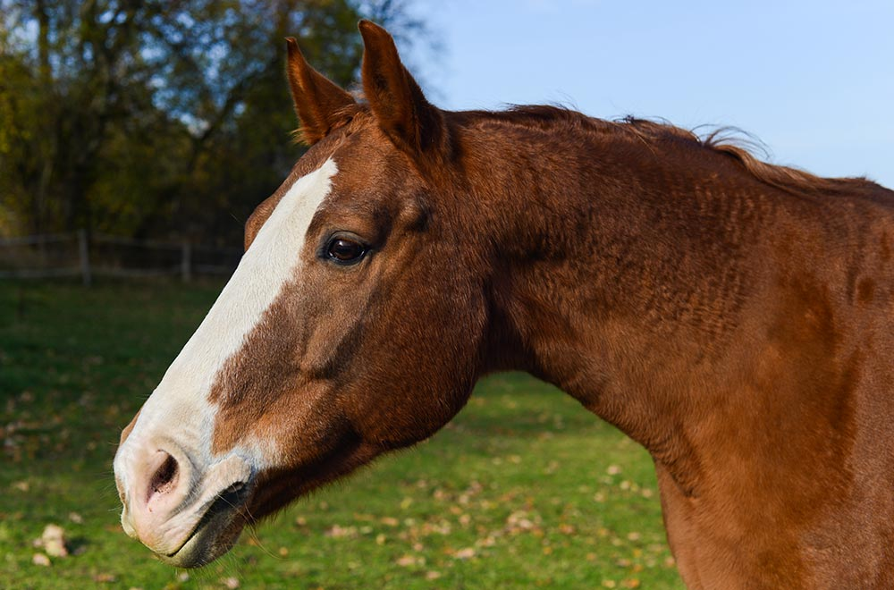 Pferdegestütztes Resilienz Coaching